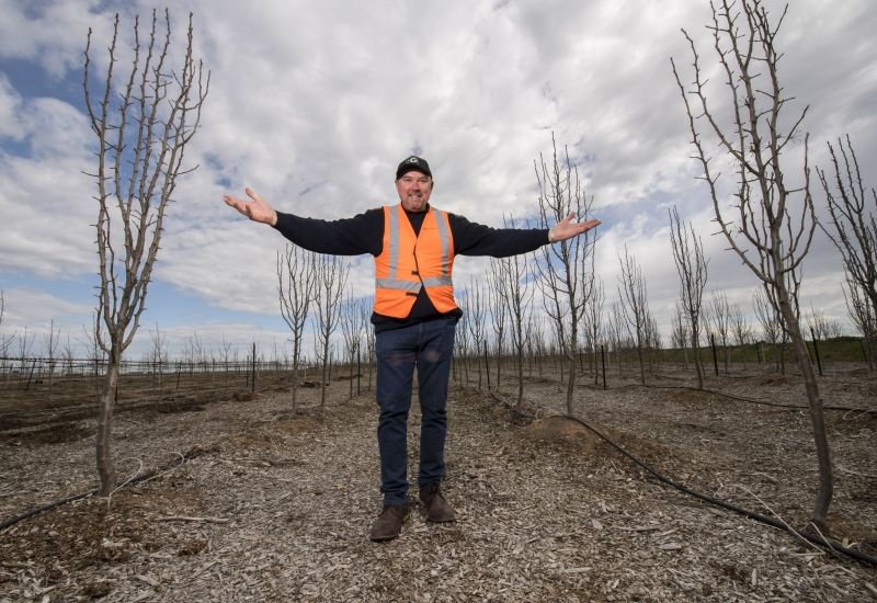 Click to view gallery of images. Photo of Essendon Fields tree farm managed by Super Gardens